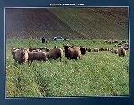 Porsche 911 Poster, 1979
