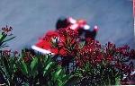 Passione Rossa G P Monaco