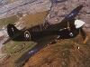 Curtiss P-40n Flugzeug Luftfahrt