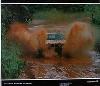 Kankkunen/whittock Toyota Celica Turbo Rally